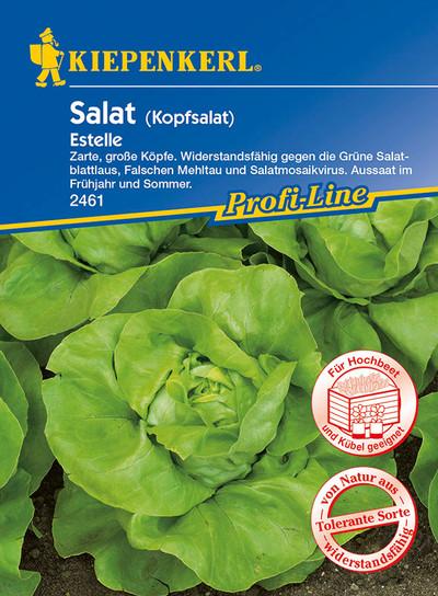 Kopfsalat Estelle | Kopfsalatsamen von Kiepenkerl