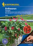 Erdbeere Toscana (Pillensaat) | Erdbeersamen von Kiepenkerl