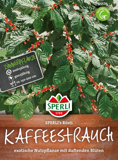 Sperli-Samen Kaffeebaum