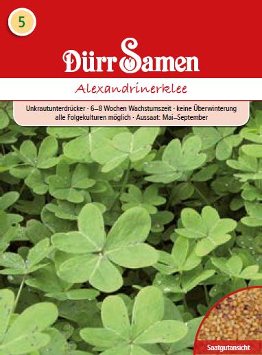 Gründünger Alexandrinerklee 500 g | Gründünger von Dürr Samen