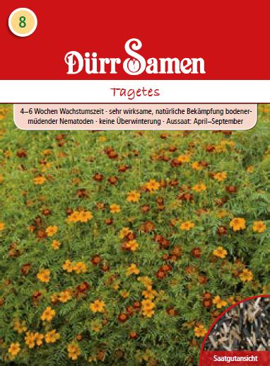 Gründünger Tagetes 100 g | Gründünger von Dürr Samen