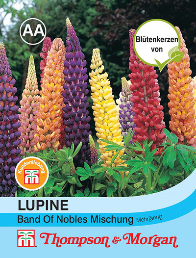 Lupine Band of Nobles Mischung | Lupinensamen von Thompson & Morgan