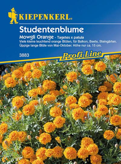 Studentenblume Mowgli Orange | Studentenblumensamen von Kiepenkerl