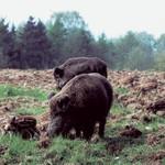 Reparaturmischung Dauerweide Standard GV | Wildackersamen von Kiepenkerl