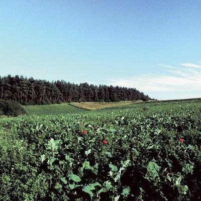 Herbst- & Wintermischung für Hoch- & Niederwild | Wildackersamen von Kiepenkerl