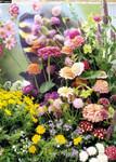 Wildblumen - Süddeutschland, Schmetterlingswiese von Tropica