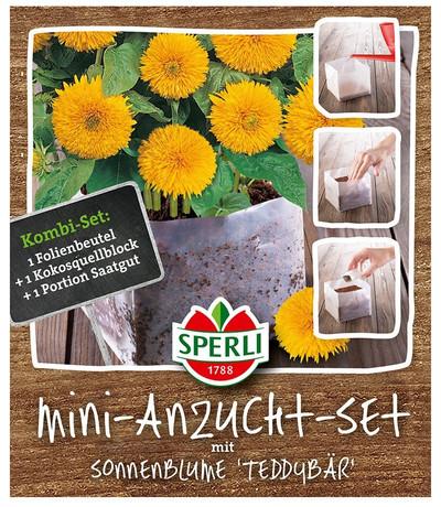[STREICHUNG '18] Mini-Anzuchtset  Sonnenblume Teddybär | Anzuchtset  von Sperli-Samen