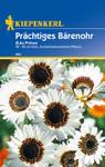 Prächtiges Bärenohr Zulu Prince | Prächtiges Bährenohrsamen von Kiepenkerl