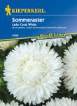 Sommeraster Lady Coral White | Sommerastersamen von Kiepenkerl
