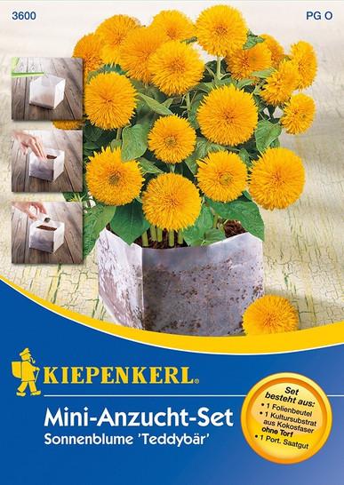 Mini-Anzuchtset Helianthus Teddybär von Kiepenkerl