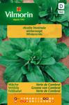 Salatsamen - Feldsalat Verte de Cambrai von Vilmorin [MHD 07/2018]