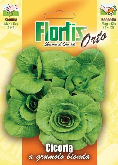 Zichorie A Grumolo Bionda | Zichoriensamen von Flortis