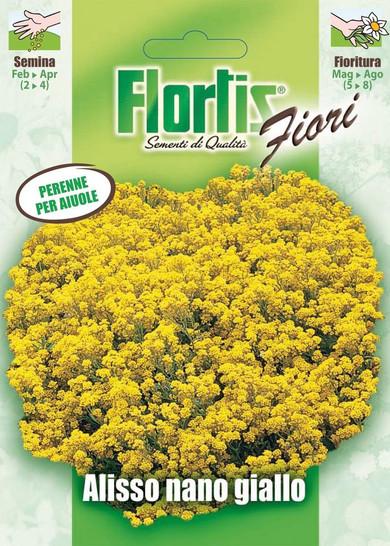 Gelbes Strand-Silberkraut  von Flortis