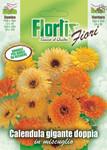 Doppelte Riesenringelblume Mischung | Ringelblumensamen von Flortis