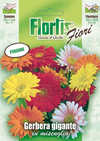 Riesige Gerbera Mischung | Gerberasamen von Flortis
