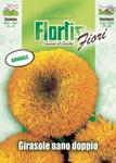 Zwerg Sonnenblume Sungold von Flortis