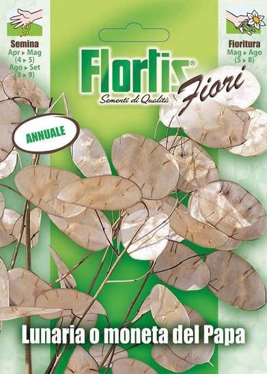 Silberblatt | Silberblattsamen von Flortis