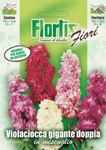 Riesige Levkoje Mischung | Levkojensamen von Flortis