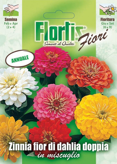 Doppelte Dhalia-Zinnie Mischung | Zinniensamen von Flortis
