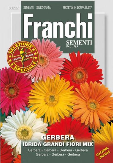 Gerbera Ibrida Multicolor   Gerberasamen von Franchi Sementi