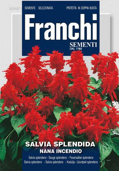 Feuersalbei Splendes Nana Incendio | Feuersalbeisamen von Franchi Sementi