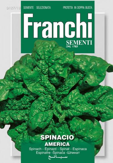 Spinatsamen - Spinat Amerika von Franchi Sementi