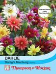 Dahlie Starlight Mischung | Dahliensamen von Thompson & Morgan