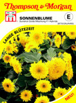 Sonnenblume Sunshot Golds Mischung F1 Hybride von Thompson & Morgan [MHD 01/2020]