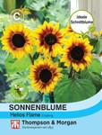 Sonnenblume Helios Flame F1 Hybride | Sonnenblumensamen von Thompson & Morgan
