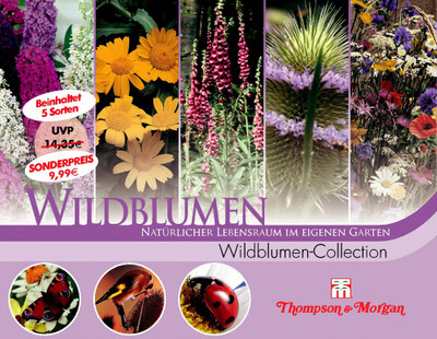 Wildblume Collection | Wildblumensamen von Thompson & Morgan