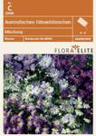 Australisches Gänseblümchen Mischung von Flora Elite