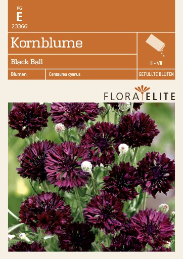 Kornblume Black Ball von Flora Elite