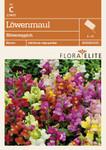 Löwenmaul Blütenteppich | Löwenmaulsamen von Flora Elite