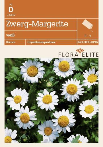 Zwerg-Margerite weiß von Flora Elite [MHD 06/2018]