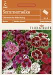 Sommernelke Chinesische Mischung von Flora Elite [MHD 06/2018]