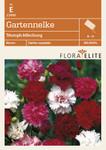 Gartennelke Triumph-Mischung [MHD 06/2019] | Nelkensamen von Flora Elite [MHD 06/2019]