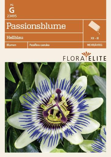 Passionsblume Hellblau von Flora Elite