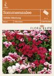 Sommerazalee Gefüllte Mischung von Flora Elite