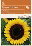 Sonnenblume Gelbe Riesen | Sonnenblumensamen von Flora Elite