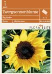 Zwergsonnenblume Big Smile von Flora Elite [MHD 06/2018]