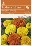 Studentenblume Hohe gefüllte Mischung von Flora Elite [MHD 06/2018]