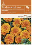 Studentenblume Orange Boy [MHD 06/2019] | Studentenblumensamen von Flora Elite [MHD 06/2019]