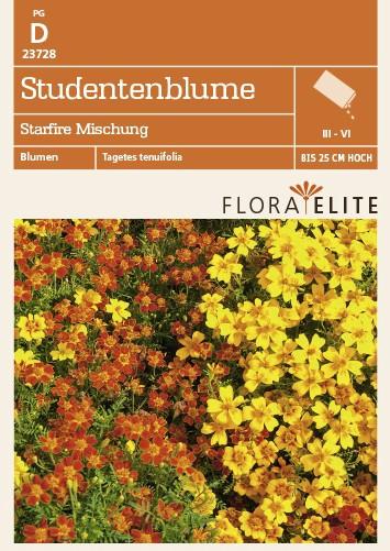 Studentenblume Starfire Mischung von Flora Elite [MHD 06/2018]