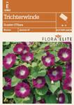 Trichterwinde Scarlet O'Hara [MHD 06/2018] | Windensamen von Flora Elite [MHD 06/2018]