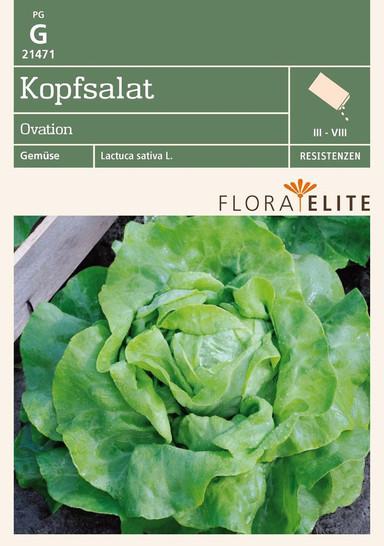 Kopfsalat Ovation von Flora Elite