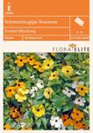Schwarzäugige Susanne Sunrise Mischung von Flora Elite [MHD 06/2019]
