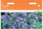 Phacelia Bienenfreund [MHD 06/2019] | Phaceliasamen von Flora Elite [MHD 06/2019]