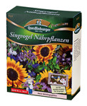 Singvogel Nährpflanzen | Blumenmischung von Quedlinburger
