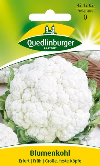 Kohlsamen - Blumenkohl Erfurter Zwerg von Quedlinburger Saatgut
