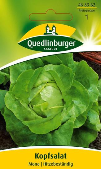 Salatsamen - Kopfsalat Mona von Quedlinburger Saatgut